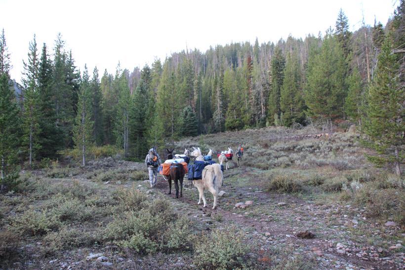 Riding in on horseback