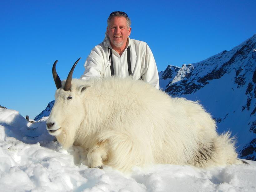Mountain goat harvest photo