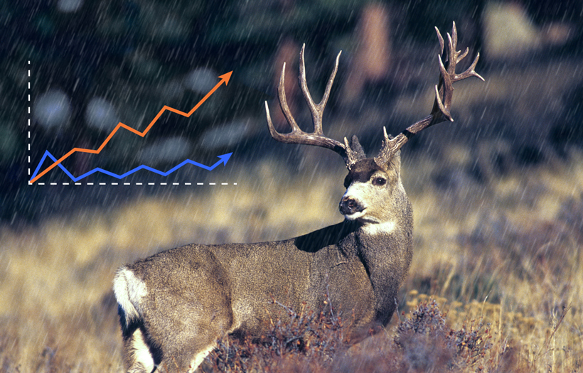 Heavy rainfall will equal great antler potential for Colorado in 2015