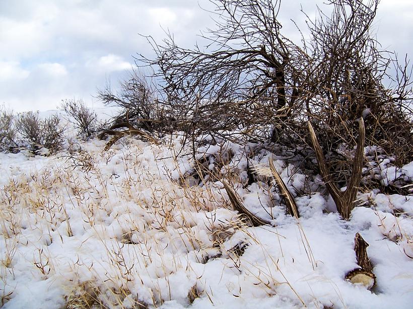 Shed Hunting Hunting News Gohunt