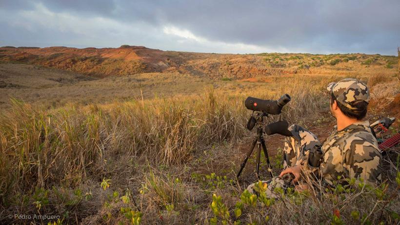 Hawaii hunting landscape