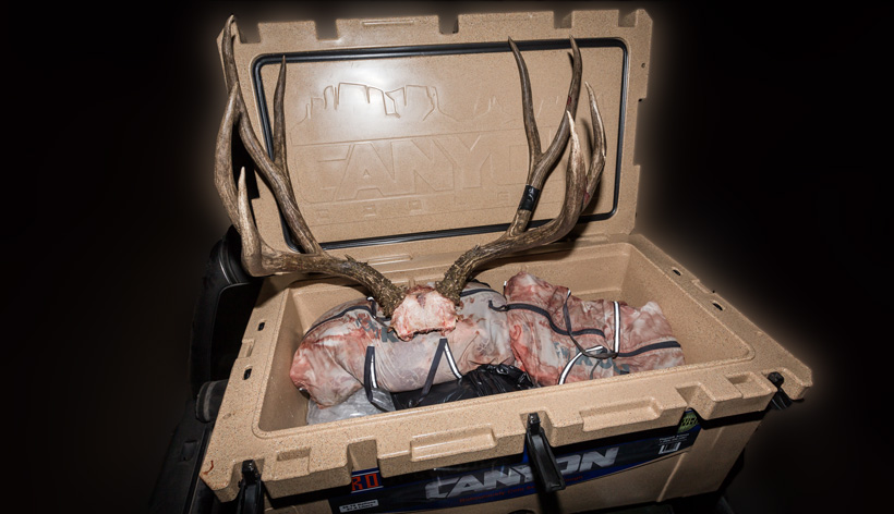 Mule deer buck and Canyon Cooler