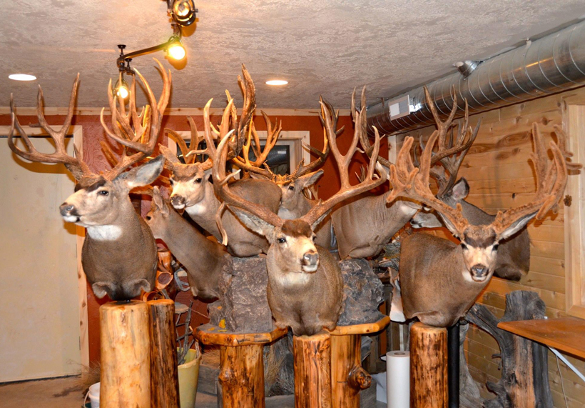 Taxidermy Trends Gohunt