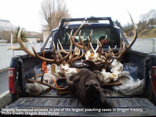 Oregon poaching