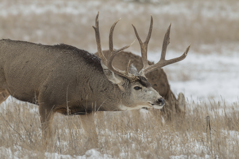 Top 10 days for a rut hunt   goHUNT