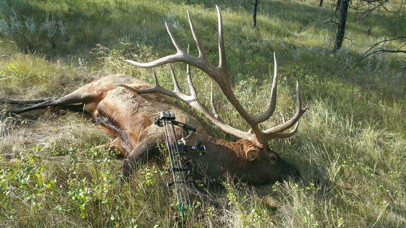 Steve Felix Montana archery world record elk field photo
