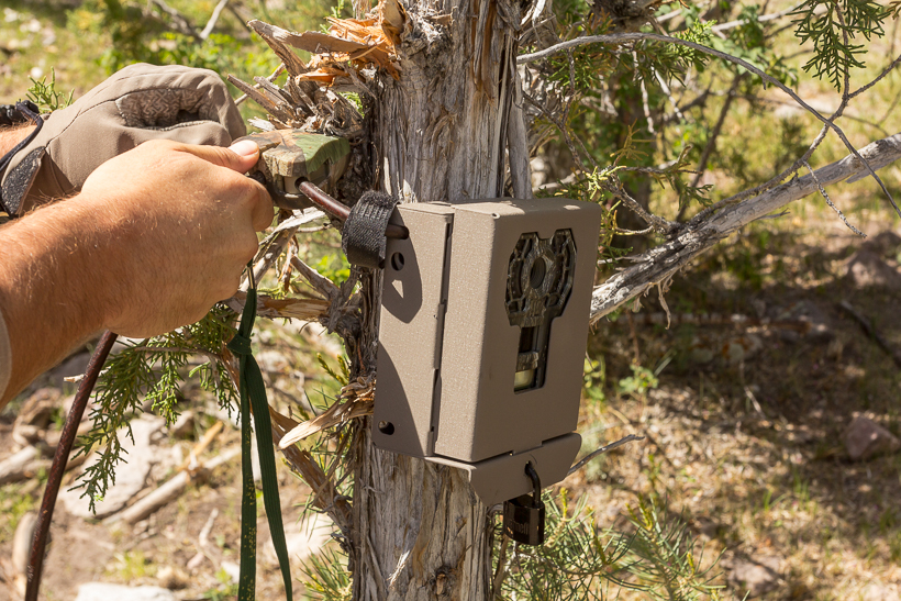 Summer trail camera scouting