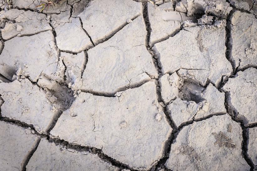 Deer tracks in dried up soil