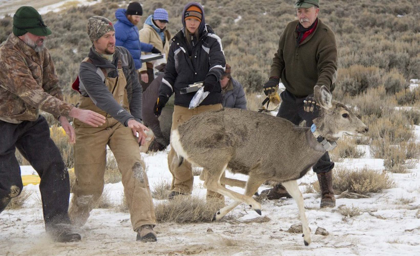 Wyoming deer research