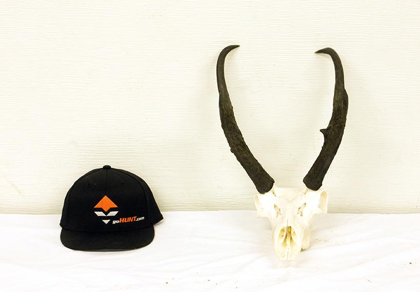 Antelope front