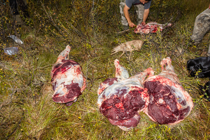 Meat Care 101 Gohunt