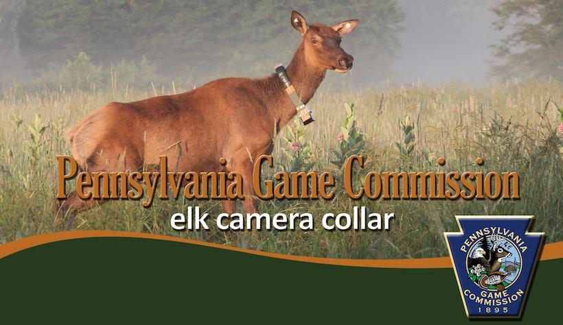 Elk camera collar