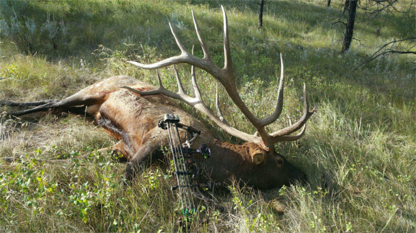 Pciture of record elk