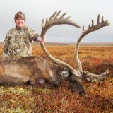 An adventure north of the Arctic Circle for caribou