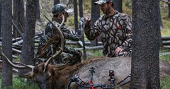 How to choose the best hunting partner